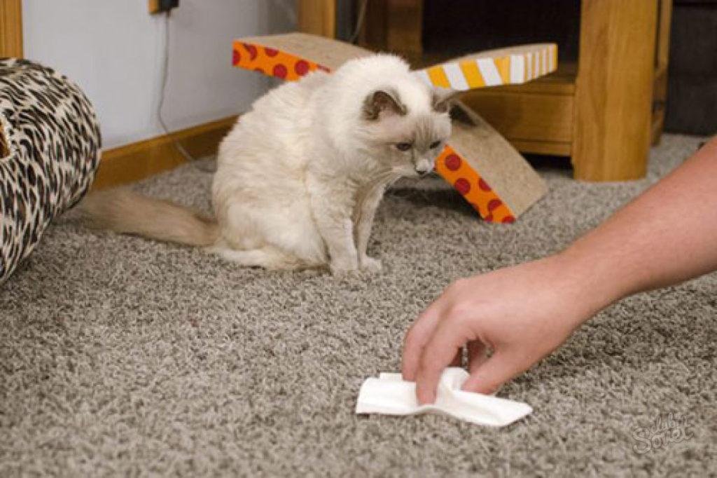 как убрать запах от кошачьей